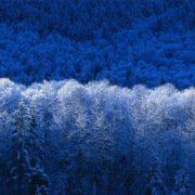 Winter Landscape|Winter