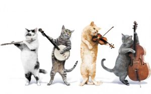 funny cat music band 300